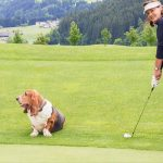Can Your Dog Make You a Better Golfer - I'm Serious!